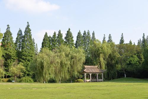 校园大草坪