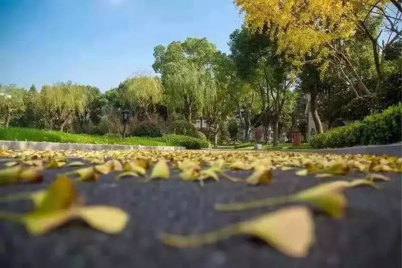美华学校的存在为淀山湖风景区增添了一股人文气息.