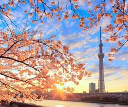 上海应用技术大学国际教育中心日本高中课程