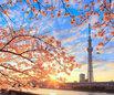 上海應用技術大學國際教育中心日本高中課程
